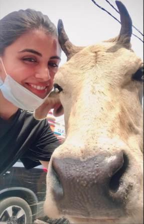 Malti Chahar cow lover